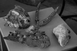 area paleontologica del Villaggio del Pescatore; Friuli Venezia Giulia